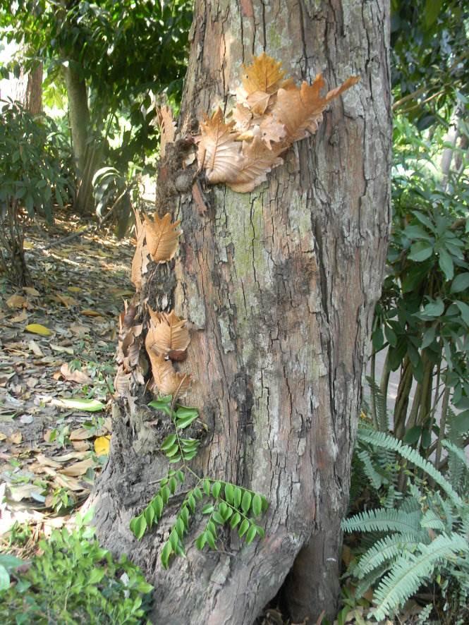 Gốc cây vấp 1 trong Thảo Cầm Viên - Ảnh: SƠN TRẦN