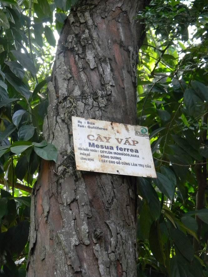 Thân cây vấp 1 trong Thảo Cầm Viên - Ảnh: SƠN TRẦN