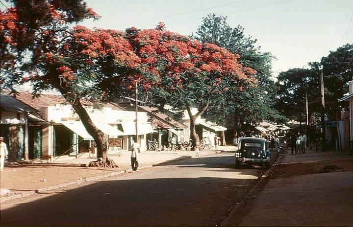 Một góc đường trải đầy hoa phượng nở