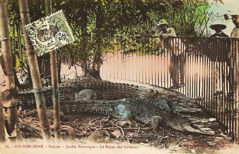 Chuồng nuôi cá sấu trong Thảo Cầm Viên