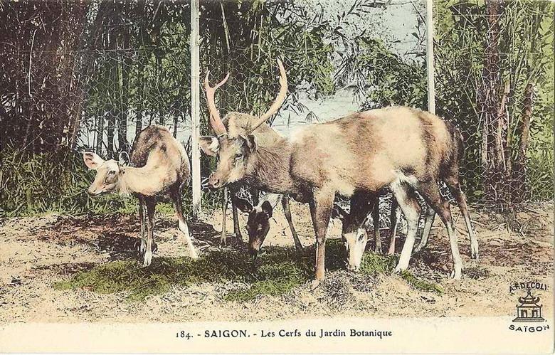 Nhiều loài động vật hoang dã của Việt Nam được nuôi dưỡng tại Thảo Cầm Viên, từ loài ăn cỏ như