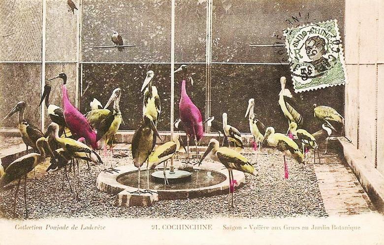Chuồng nuôi của một số loài chim quý