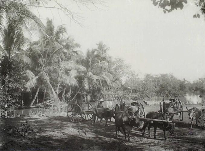 Đoàn xe bò vận chuyển lương thực (ngũ cốc,...) trên đường Cái Quan (Quốc lộ 1 ngày nay) ở Thủ Đức, các chuyến hàng này xuất phát từ Sài Gòn và kết thúc ở Phan Thiết. Ảnh tư liệu
