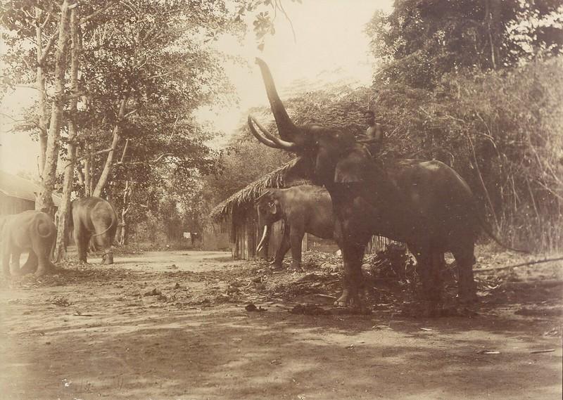 Bên trong Thảo Cầm Viên Sài Gòn năm 1902